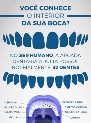 Dentes, gengiva e língua: conheça mais sobre a anatomia da sua boca